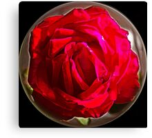 A Red Rose Canvas Print