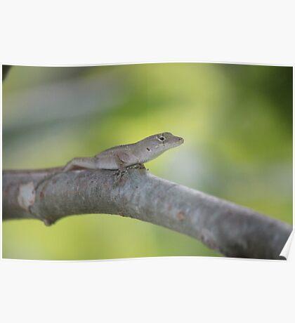 Lizard on a Limb Poster