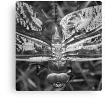 Dragonfly Canvas Print