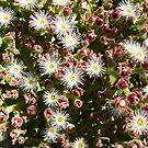 Low Flying Flora: Bunda Cliffs, Head of Bight, South Australia by linfranca