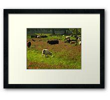 Cows 02 Framed Print