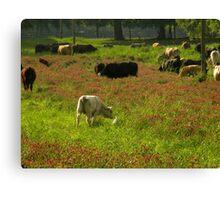 Cows 02 Canvas Print