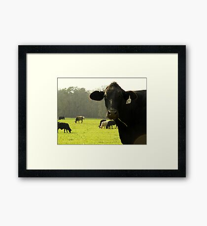 Cows 04 Framed Print