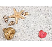 sea shells Photographic Print