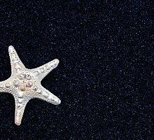 starfish by Joana Kruse