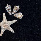 starfish and seashells by Joana Kruse