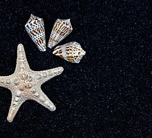 starfish and seashells by Joana Kruse