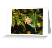 Hummingbird for the Holidays Greeting Card