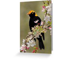 Regent Bowerbird Greeting Card
