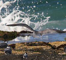 Rocky Landing by byronbackyard
