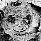 A Face On A Tree (Black &amp; White) by tropicalsamuelv