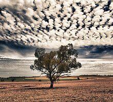 Lone Tree by stufotoart