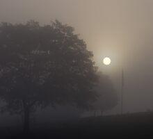 Poking Thru The Fog by Tom Gotzy