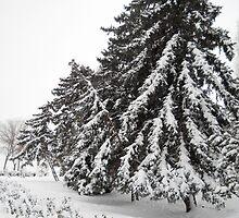 First Snow. by Vitta