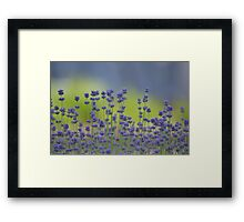 Field of Lavender Flowers Framed Print