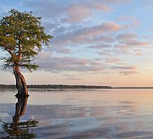 Little Tree Big Sky by Michele Conner