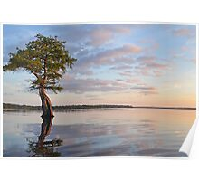 Little Tree Big Sky Poster