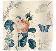 Peach Rose Vintage Poster