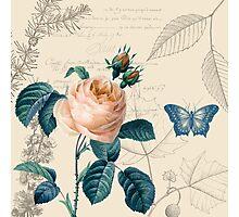 Peach Rose Vintage Photographic Print