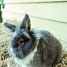 Rabbit by JEZ22