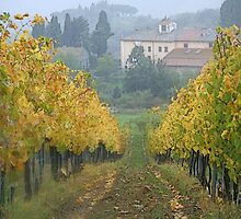 Toscana's wineyard by gluca