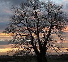 A tree by jasminewang