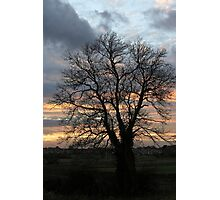 A tree Photographic Print
