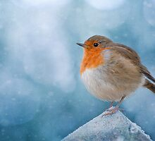 Chilly by Jacky Parker