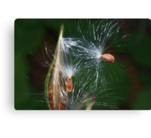 Flying seeds Canvas Print