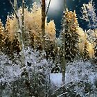 Starshine on a Snowy Wood by RC deWinter