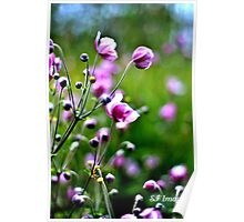 Falls early bloom Poster