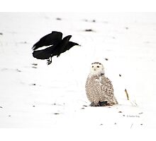 The crow and the owl Photographic Print