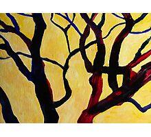 Yellow Tree 1 Photographic Print