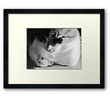 Contemplating Cat Framed Print