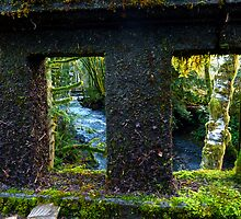 Barn's Creek Bridge in Olympic Rainforest by Elaine Bawden