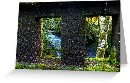 Barn's Creek Bridge in Olympic Rainforest by Elaine Bawden