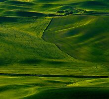 Within a Sea of Green by DawsonImages