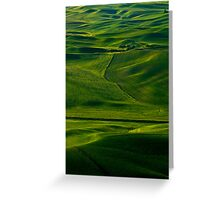 Within a Sea of Green Greeting Card