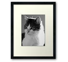 Cat Gazing Framed Print