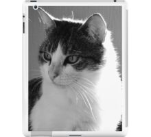 Cat Gazing iPad Case/Skin