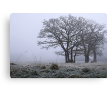 Ground Frost Canvas Print