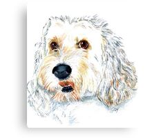 White Labraoodle Maggie Canvas Print