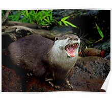 Yawning Otter Poster