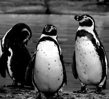 Three Penguins by Barnbk02