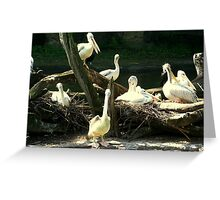 Group Of Pelicans Nesting Greeting Card