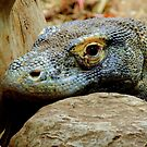 Komodo Dragon by Barnbk02