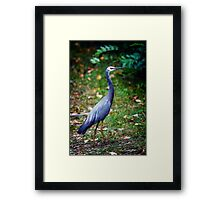 Great Blue Heron.... Framed Print