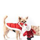 Chihuahua Christmas by Dan Shalloe