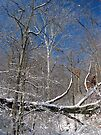 Snow Covered Tree Bridge by Ron Russell