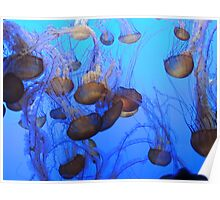 Almost Blue Jelly Fish Poster